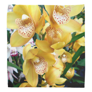 Yellow Cymbidium Orchids Bandana