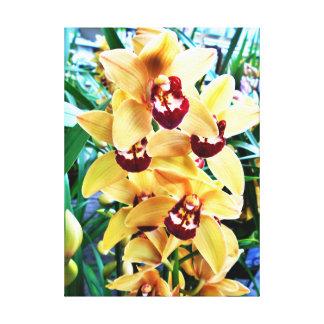 Yellow Cymbidium Orchids Canvas Print