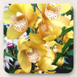 Yellow Cymbidium Orchids Coaster