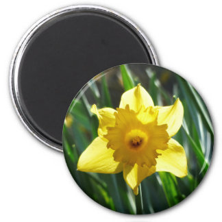 Yellow Daffodil 02.2_rd 6 Cm Round Magnet