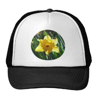 Yellow Daffodil 02.2_rd Cap