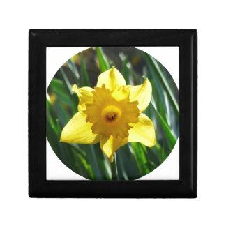 Yellow Daffodil 02.2_rd Gift Box