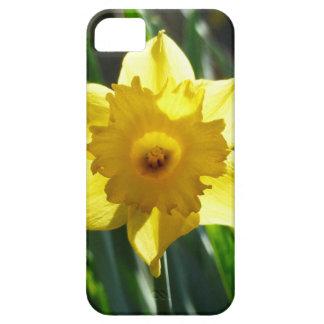 Yellow Daffodil 02.2_rd iPhone 5 Case