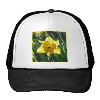 Yellow Daffodil 02.3. Cap