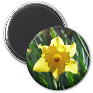 Yellow Daffodil 03.0.g 6 Cm Round Magnet
