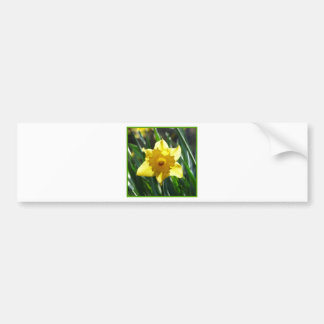 Yellow Daffodil 03.0.g Bumper Sticker