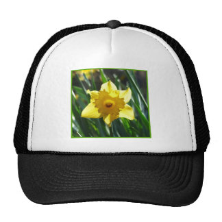 Yellow Daffodil 03.0.g Cap