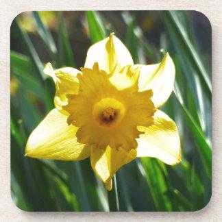 Yellow Daffodil 03.0.g Coaster