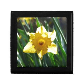 Yellow Daffodil 03.0.g Gift Box