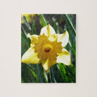 Yellow Daffodil 03.0.g Jigsaw Puzzle