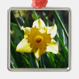Yellow Daffodil 03.0.g Silver-Colored Square Decoration