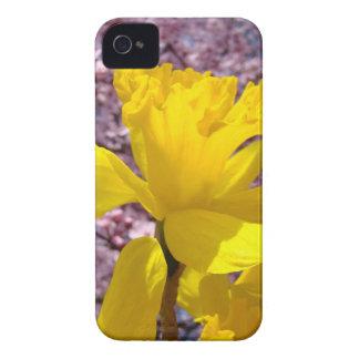 Yellow Daffodil Flower Blackberry Bold cases