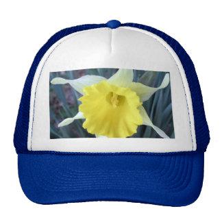 Yellow Daffodil Flower Floral Macro Cap