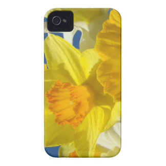 Yellow Daffodil Flowers BlackBerry BOLD cases