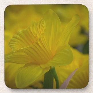 Yellow daffodils hard plastic coasters