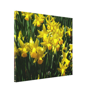 Yellow Daffodils I Cheery Spring Flowers Canvas Prints