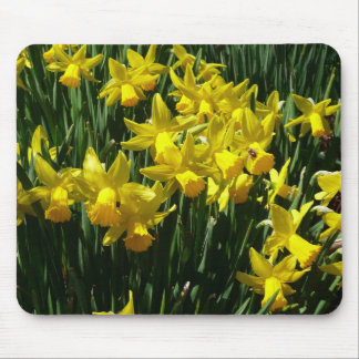 Yellow Daffodils I Cheery Spring Flowers Mouse Pad