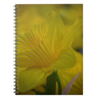 Yellow daffodils notebook