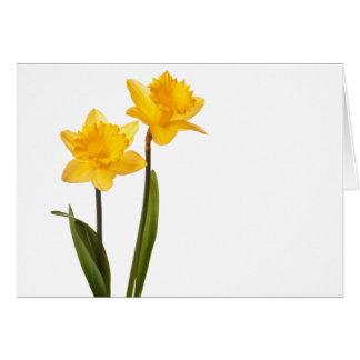 Yellow Daffodils on White - Daffodil Flower Blank Note Card