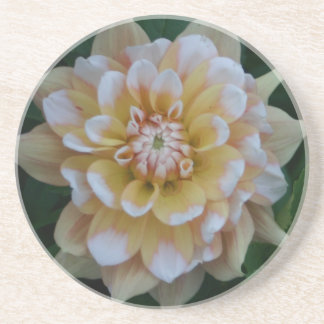 Yellow dahlia flower blossom coaster