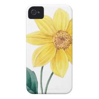 Yellow dahlia vintage illustration iPhone 4 cover