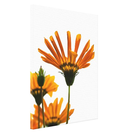 Yellow Daisies Gallery Wrap Canvas