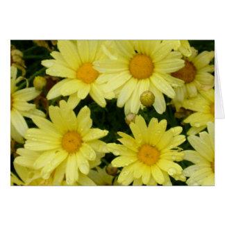 yellow daisies card