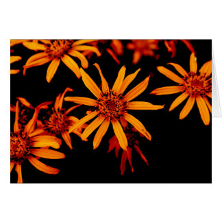 Yellow Daisies Greeting Cards