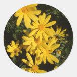Yellow Daisies Classic Round Sticker