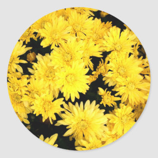 yellow daisies flower photo picture round stickers