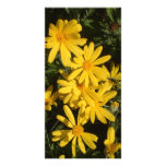 Yellow Daisies Personalized Photo Card