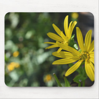 Yellow Daisy Flower Floral Nature Photography Mouse Pad
