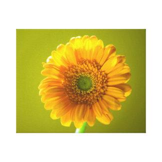 Yellow Daisy Gerbera Flower Canvas Prints