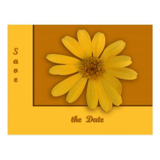 Yellow Daisy Post Cards