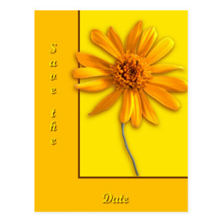 Yellow Daisy Postcards