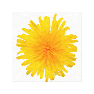Yellow Dandelion Flower Canvas Print