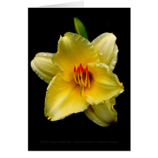Yellow Daylily Blank Card
