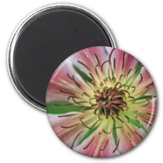 Yellow Delicate pink flowers Magnets