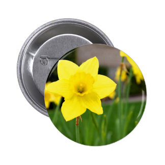 Yellow Delight-Spring Daffodil 6 Cm Round Badge
