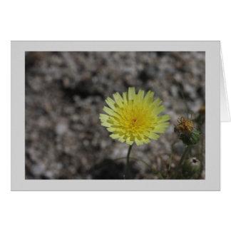 Yellow desert wildflower greeting card