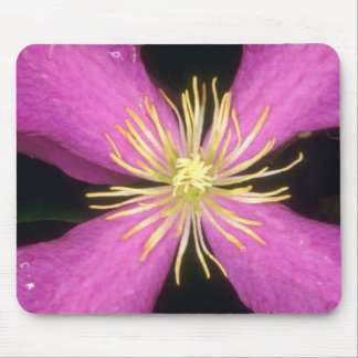 Yellow Dramatic Clematis flowers Mouse Pad