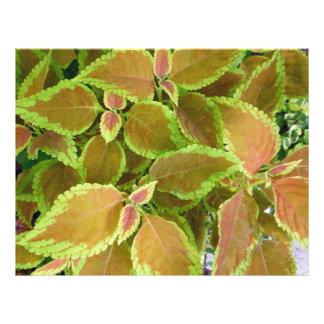Yellow edged coleus plant flyers