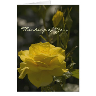 Yellow Evening Rose, Thinking of You Card