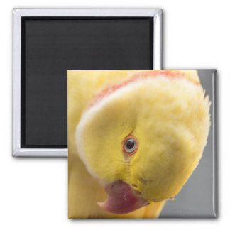 Yellow Fellow Square Magnet