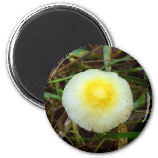 Yellow Field Cap Mushroom Magnet