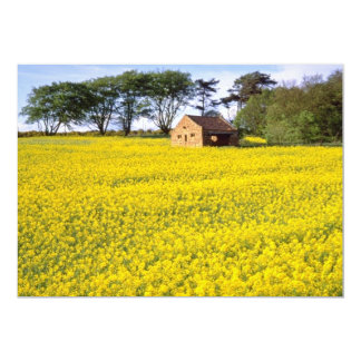 yellow Field of yellow rapeseed in North Yorkshire Custom Invitations