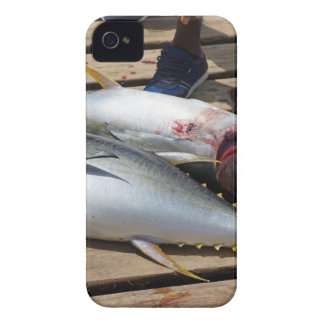 yellow fins tuna iPhone 4 covers