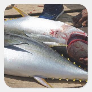 yellow fins tuna square sticker