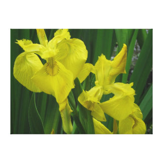 Yellow Flag Water Iris Canvas Print