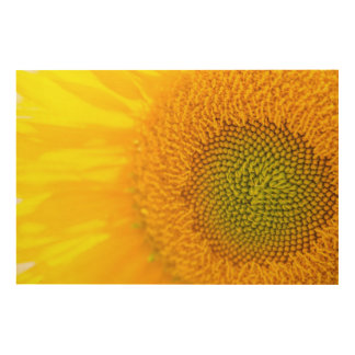 Yellow Floral Sunflower Wood Print